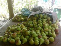 Интересный бизнес — продажа фруктов через Интернет