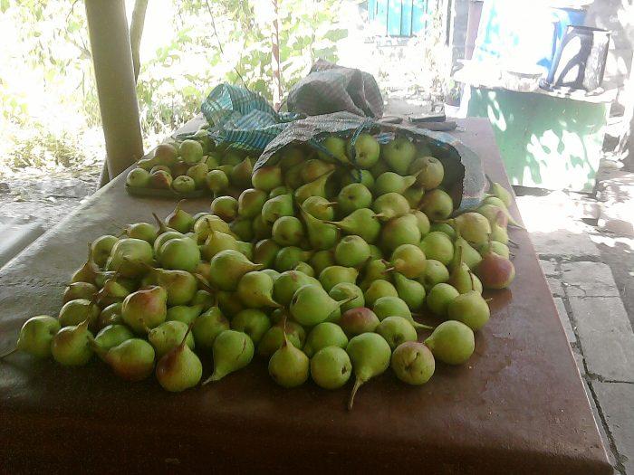 Интересный бизнес в виде продажи фруктов через Интернет