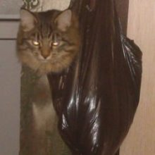Выигрывают ли продавцы, которые продают кота в мешке?