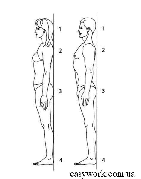 Упражнение на осанку с касанием в 4 точках