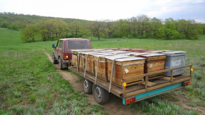 Перевозка пчел на поле