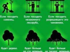 Плодовые деревья для сада, покупка и посадка