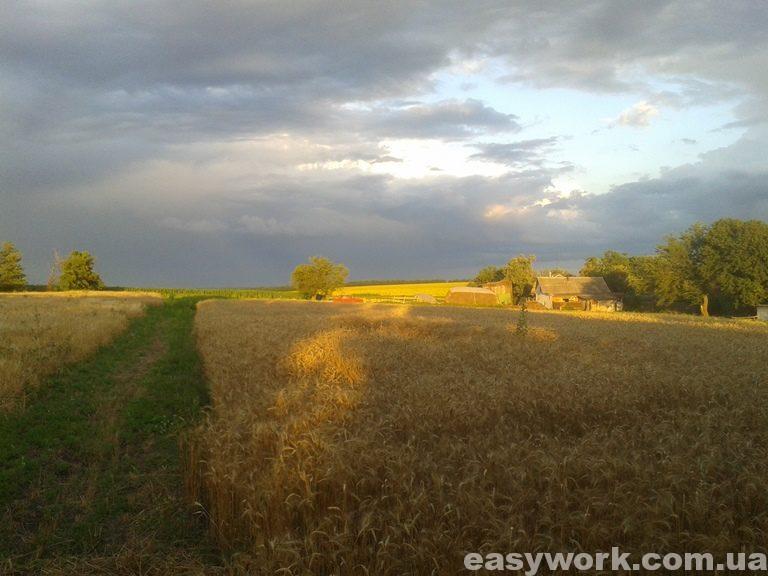 Село в Полтавской области (фото 2)