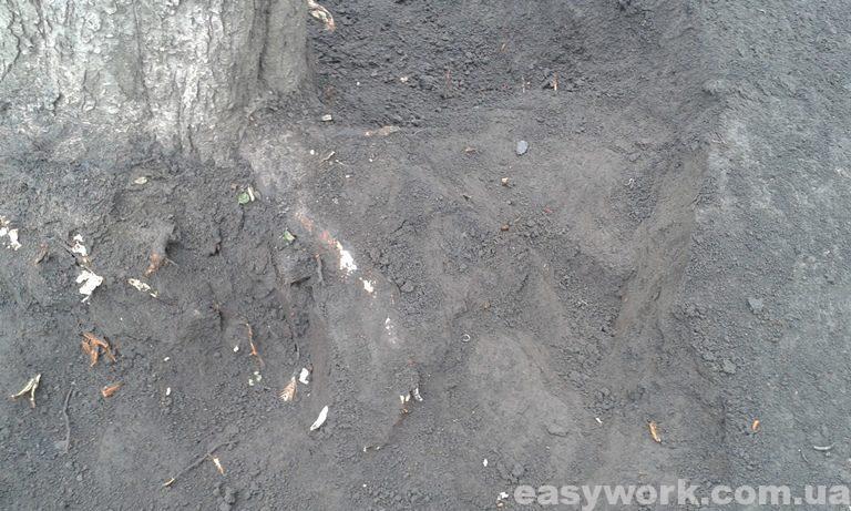 Не раскопанный корень дерева в земле