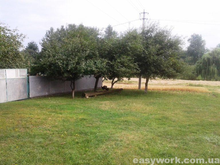 Зеленая поляна перед двором