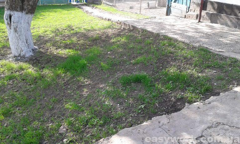 Рост газонной травы (фото 5)