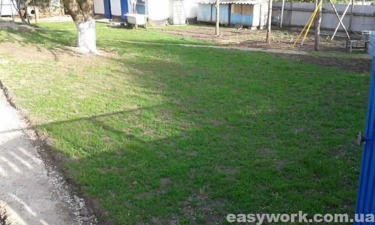 Рост газонной травы (фото 1)