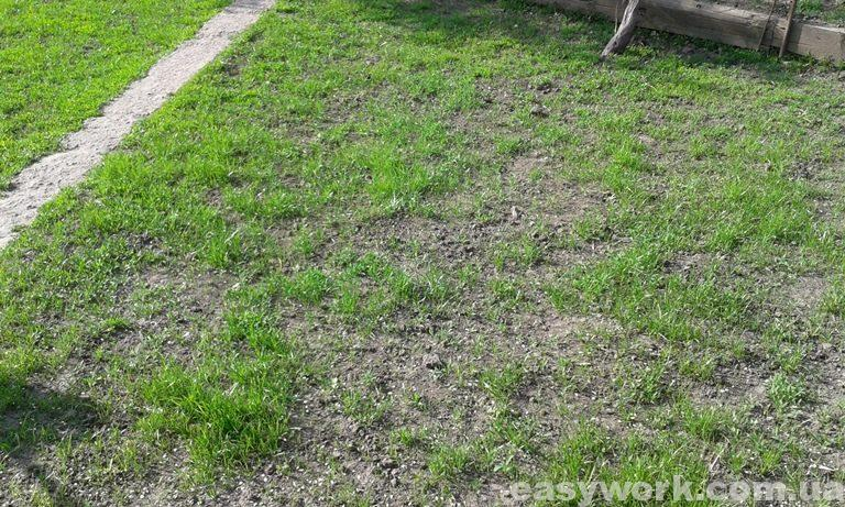 Рост газонной травы (фото 2)