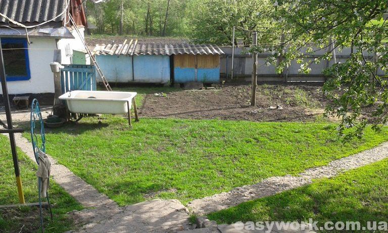 Рост газонной травы (фото 3)