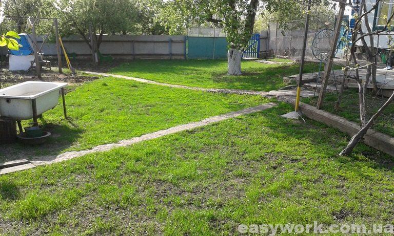 Рост газонной травы (фото 4)