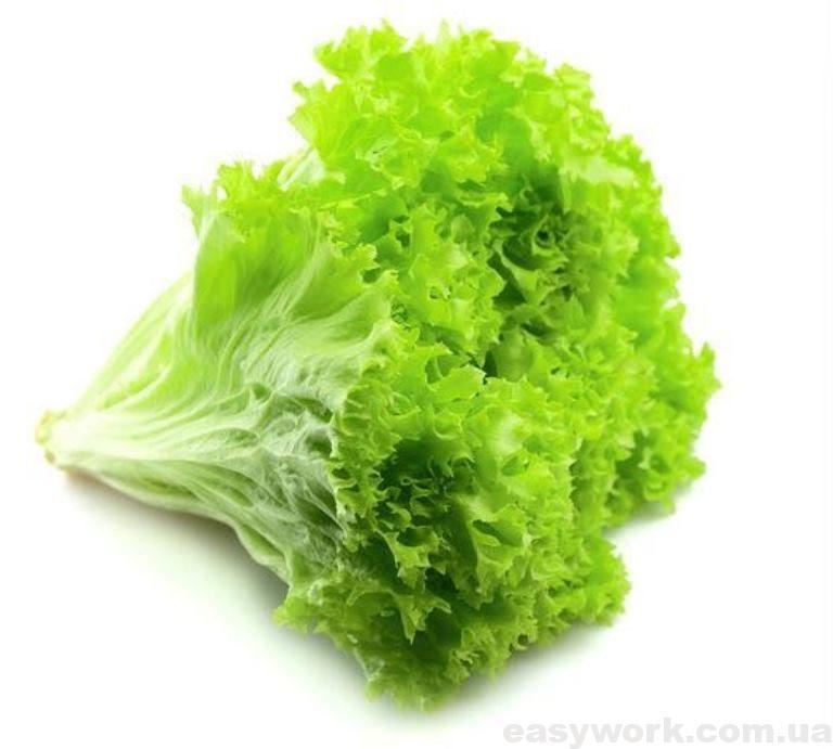 Латук (салат)