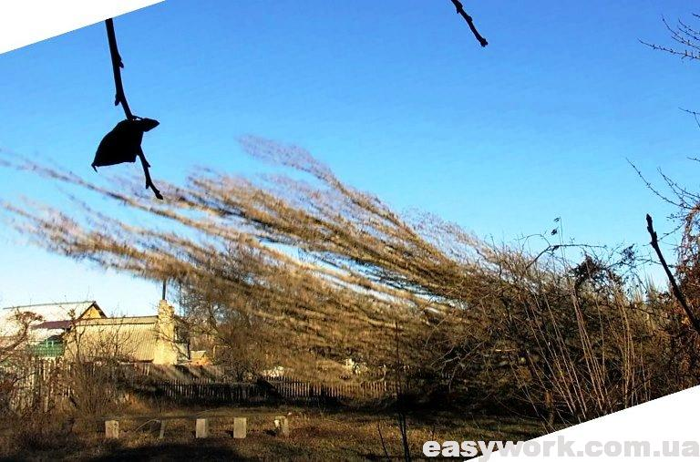 Падение дерева (тополя) фото 2