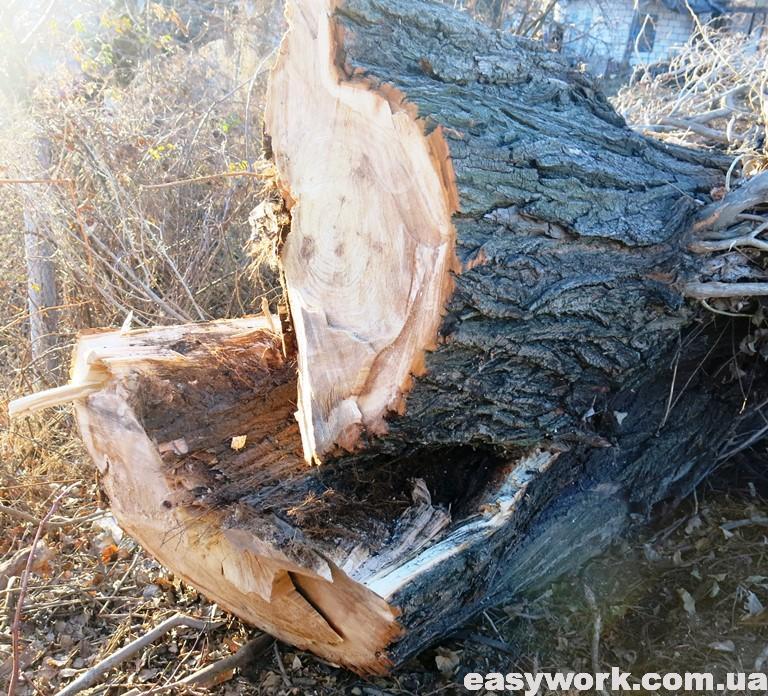 Раскол дерева на две половины
