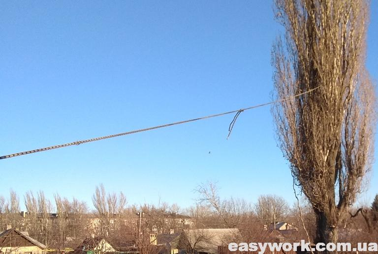 Натянутая веревка на тополь